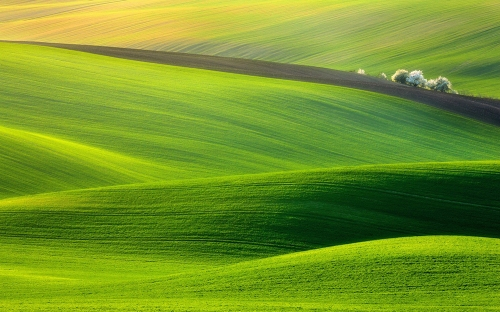 nature-landscapes_widewallpaper_greener-pastures_2611